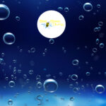 5_Sea_bees